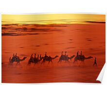 Broome Camels Poster