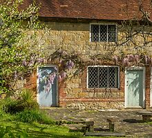 Wisteria and blue doors by Judi Lion