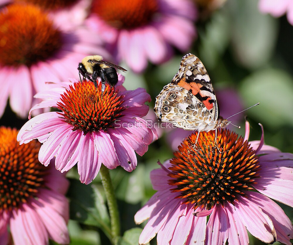 'Painted Lady and Bumble Bee' by Scott Bricker