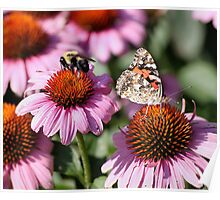 'Painted Lady and Bumble Bee' Poster