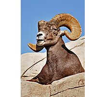 Majestic Ram Photographic Print