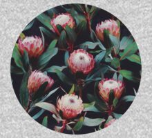 Evening Proteas - Pink on Charcoal Kids Clothes