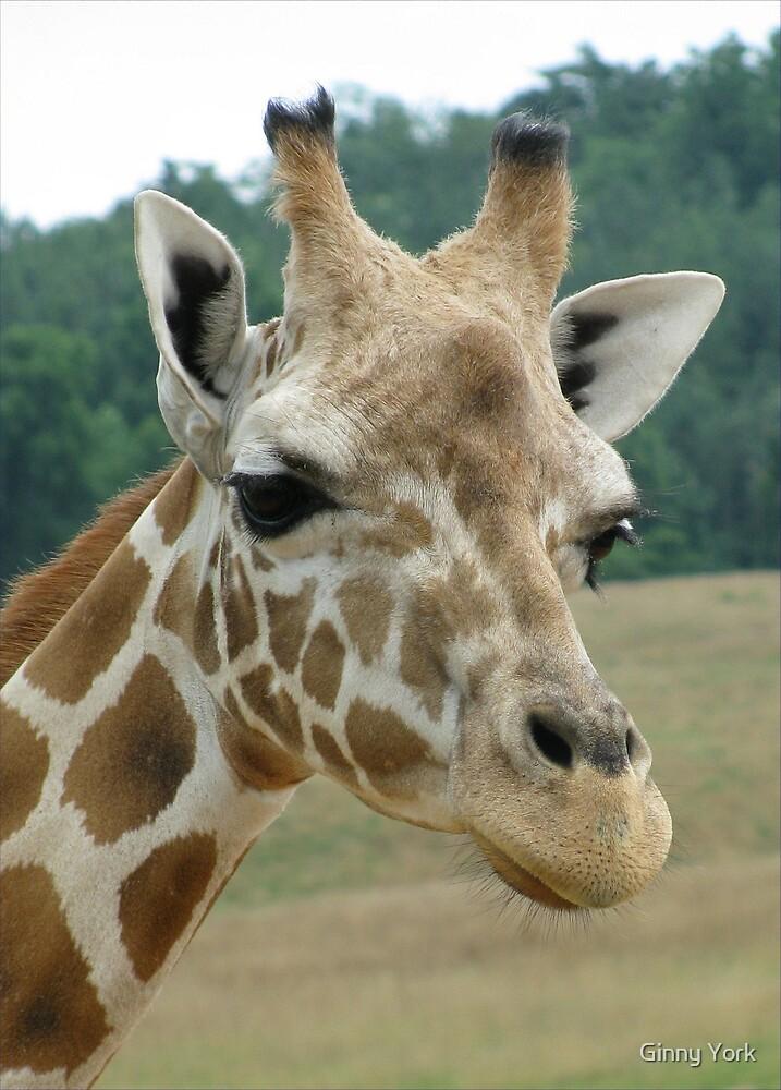 Giraffe by Ginny York