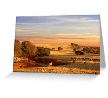 Sheep Grazing at Sunset - Kanmantoo, South Australia Greeting Card