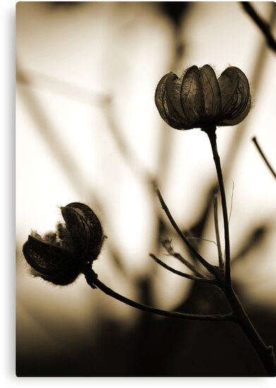 Seed Pods 1 by Susan Brown