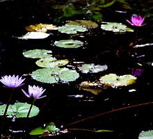 Lilly pads off the trail by exaltedshrimp