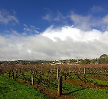 The vineyard that produces the famed Grange Hermitage wine by John Mitchell