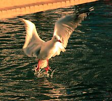 Seagull 1 by doctordray