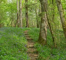 Steps through a bluebell wood by Judi Lion