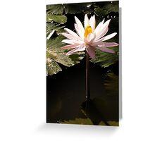Water Lily in Murni's Villas, Bali Greeting Card
