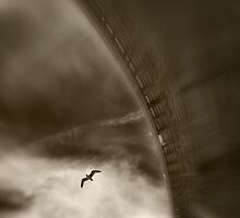 Solitary by maxblack