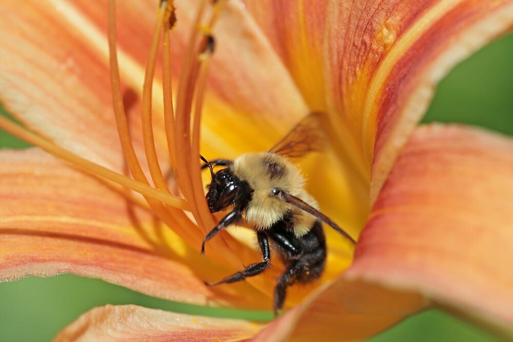 pollen displacement unit  by Paul Kavsak