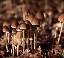 Autumn Fungi Convention by tracylb