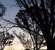 Silhouetted Trees by Zac Ellis
