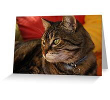 Contemplation (The Feral Oriental Tabby) Greeting Card