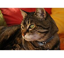 Contemplation (The Feral Oriental Tabby) Photographic Print