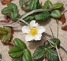 Beach Strawberry Flower by Diane Philips