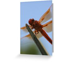 Smiling Dragonfly Iphone Case Greeting Card
