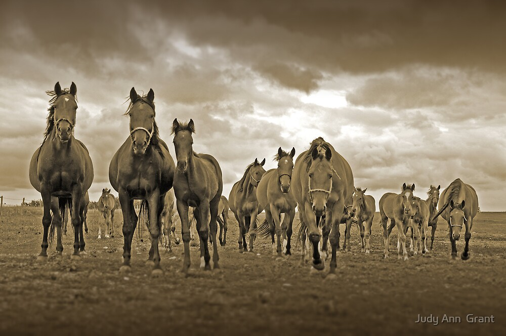 The Gang is all Here ! by Judy Grant