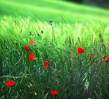 Green and poppies by Rick  Senley