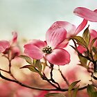 Dogwood Dreams by Jessica Jenney