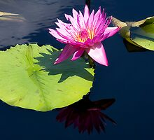 Lonely Lilly by Trudy Wilkerson