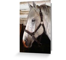 Grey Percheron Beauty Greeting Card