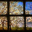 It's spring outside by Silvia Ganora