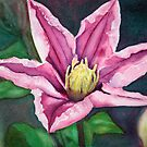 Clematis II by KristaHasson