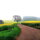 Rape fields in north Notts. by naranzaria
