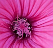 pink by Stefan Trenker