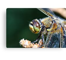Dragonfly Eye Canvas Print