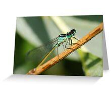 Damsel Flys eyes Greeting Card