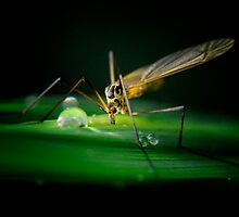 Insect, but whats my name? by Karen  Betts