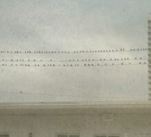 Birds on a Wire Sticker