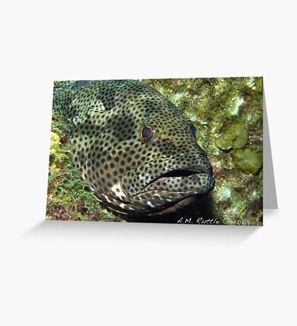 Fish Sleep? Greeting Card