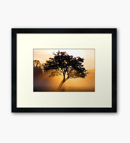 Burning Tree Framed Print
