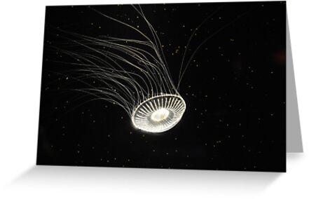 Galactic by Anne Smyth