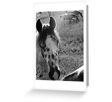 neighborhood horses #7 Greeting Card