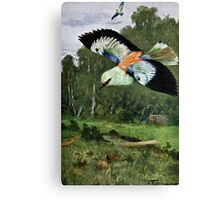 Blue Roller Bird Art Canvas Print