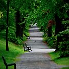 Path in The Park by Charles Plant