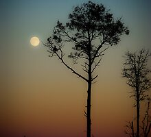 Moonrise by Charles Plant