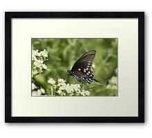 Tiger Swallowtail Framed Print