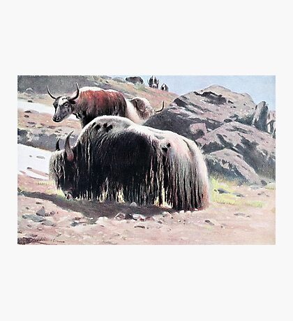 Yaks Vintage Painting Photographic Print