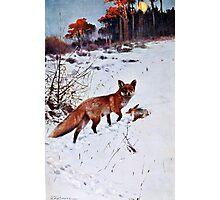 Red Fox Hunting Art Photographic Print