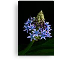 Caribbean Lily Canvas Print