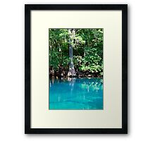 Cypress Beauty Framed Print