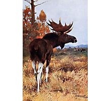 Vintage Moose Painting Photographic Print