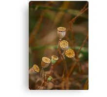 memories of early summer Canvas Print