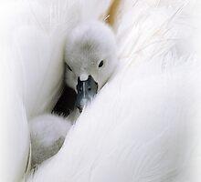 Snuggle  by Jacky Parker